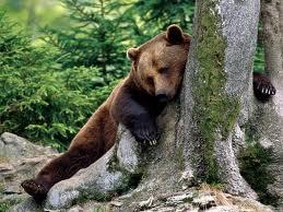 Bear Sabbath