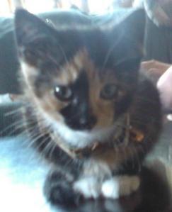 Jemima Kitten